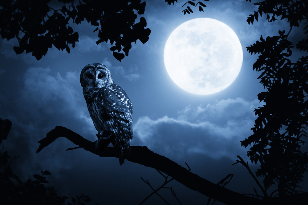 A Quiet Night, A Bright Moon and a Barred Owl